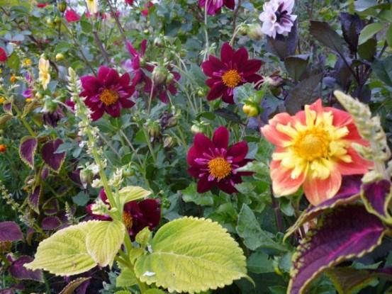 Стильна колекція у квітнику: як виростити багаторічники з насіння