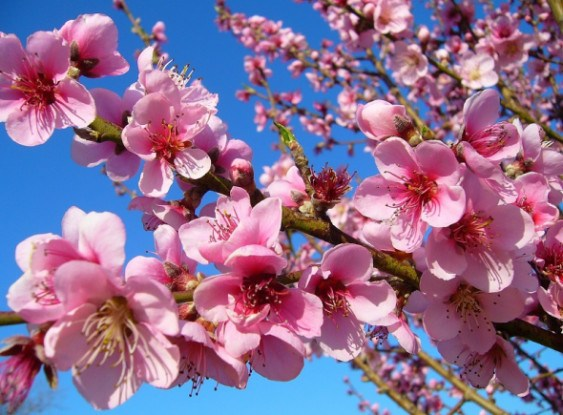 Захисти врожай в своєму саду від хвороб та шкідників!