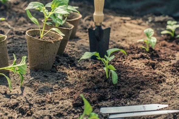 Готують сани влітку, а землю восени: заготовка субстрату для розсади
