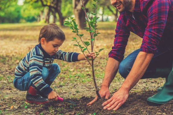 Осеняя посадка деревьев