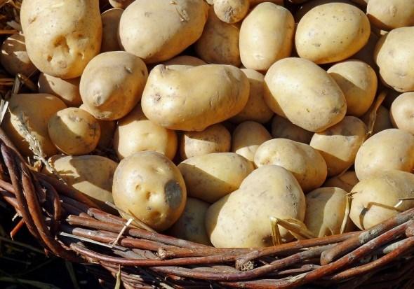 як зберегти картоплю до весни