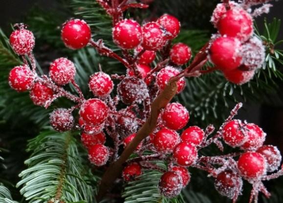 Рослини, що творять дива: повір'я, обряди та оберіги на зимові свята