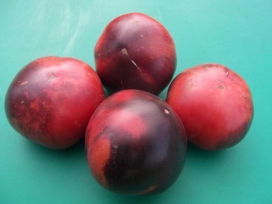 Rosella Purple