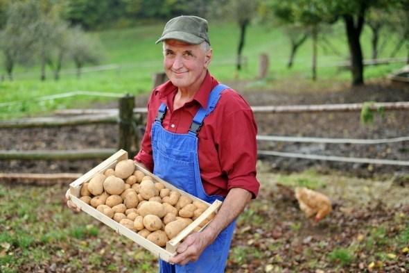 Пошли копать картошку!