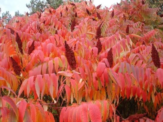 Природа пишно в'яне: декоративні садові рослини восени