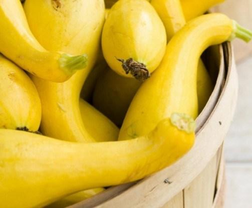 Что такое крукнек и как его выращивать