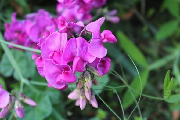 Посев однолетних цветов в грунт