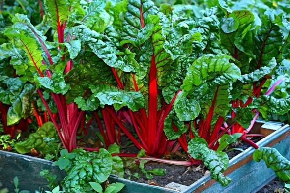 Запускаем «зеленый конвейер»: первые овощи сезона