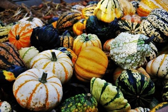 """Красені """"а-ля Фаберже"""": декоративні види гарбуза на городі"""