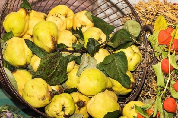 Золоті плоди для краси і здоров'я: лікувальні та харчові властивості айви