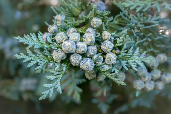 Догляд за квітниками та декоративними рослинами в грудні: календар роботи у садибі
