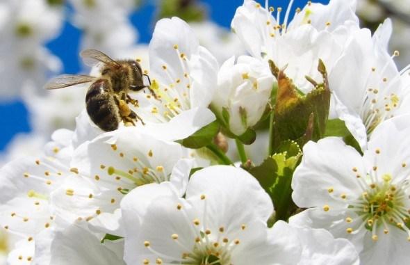 Прованто Вернал - безпечний до бджіл та нещадний до шкідників саду і городу!
