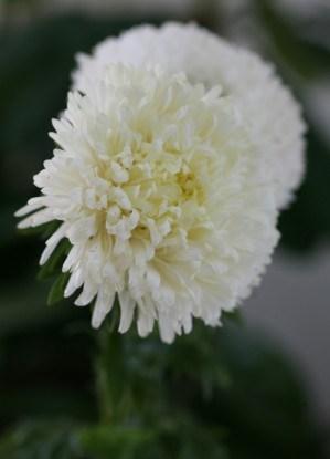 White (Вайт)