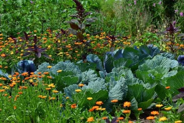 Выращивание огородных культур в смешанных посадках