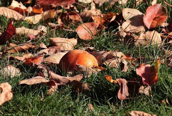 Жовтень-златолист нагадує: час підготувати сад до зимівлі