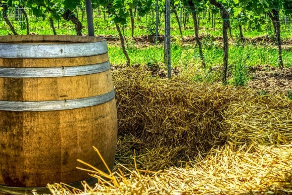 Досвід домашнього виноробства: білий спосіб приготування вина