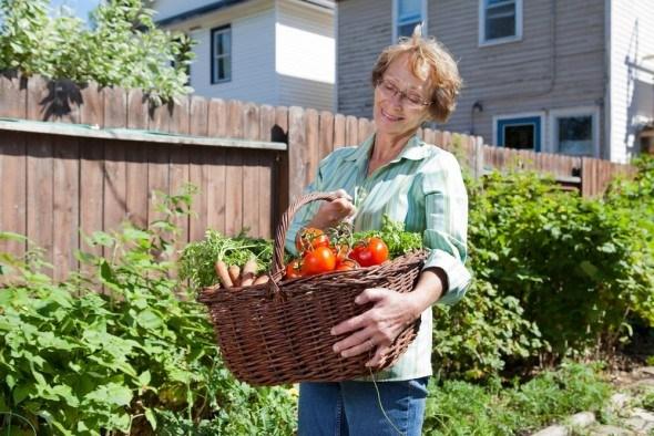Пасынкования томатов