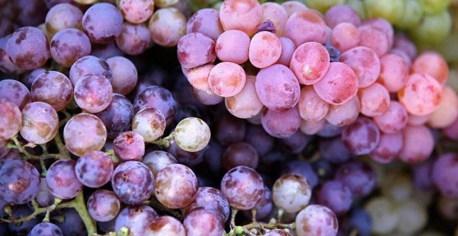 Смачна терапія: корисні властивості винограду