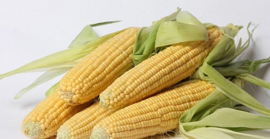 Цукрова кукурудза: особливості вирощування