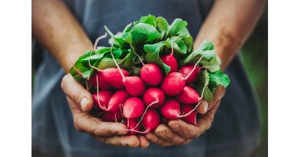 Сеялка для редиса ручная вакуумная и иные приспособления для посадки овоща своими руками, использование доски для изготовления маркера, фото