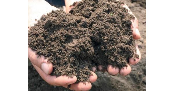 Глинисто каменистая почва