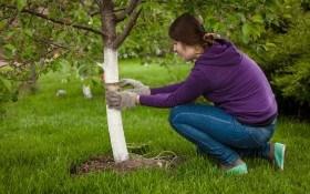 Как приготовить садовый вар в домашних условиях